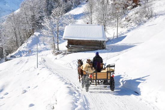 Pferdeschlittenfahrten - Winterurlaub am Bio-Bauernhof Langbruckgut in Eben